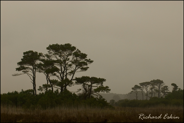 Chincoteague Marsh